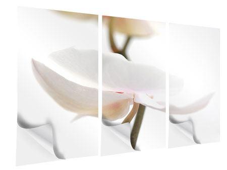 Klebeposter 3-teilig XXL Orchideenblüte