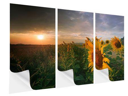 Klebeposter 3-teilig Sonnenblumen im Lichtspiel