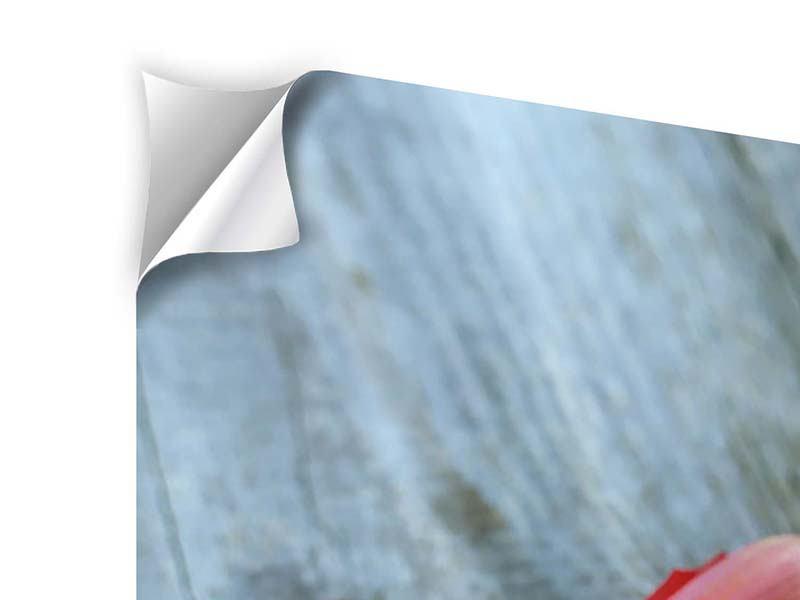 Klebeposter 3-teilig Der rote Tulpenstrauss