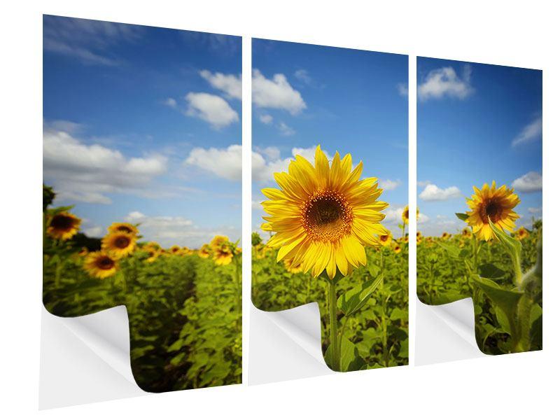 Klebeposter 3-teilig Sommer-Sonnenblumen