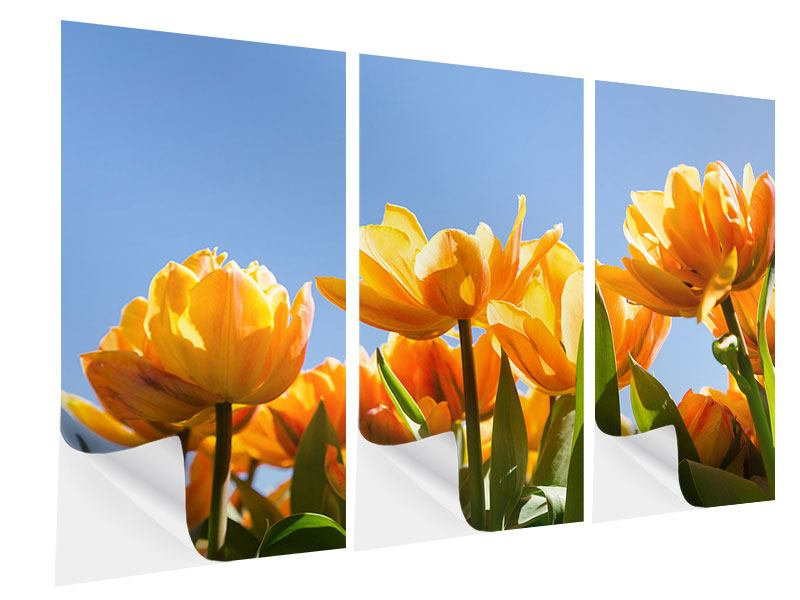 Klebeposter 3-teilig Märchenhafte Tulpen