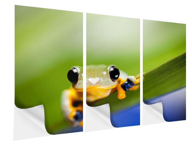 Klebeposter 3-teilig Frosch XXL