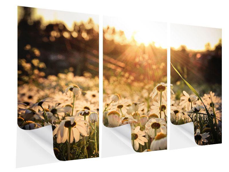 Klebeposter 3-teilig Gänseblümchen bei Sonnenuntergang