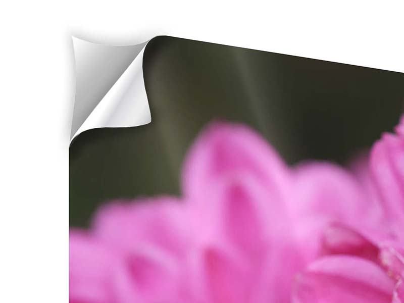 Klebeposter 3-teilig Chrysanthemen