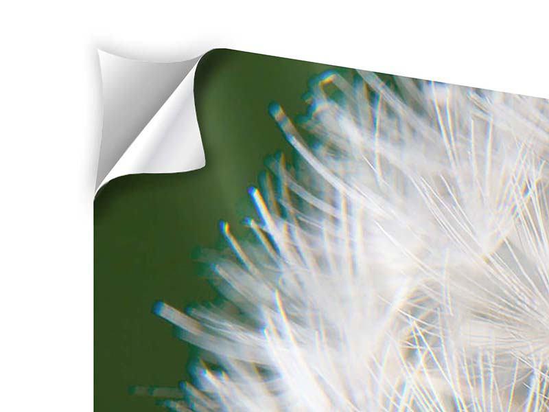 Klebeposter 3-teilig Riesenlöwenzahn