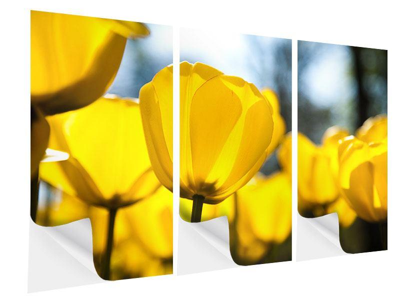 Klebeposter 3-teilig Gelbe Tulpen in XXL