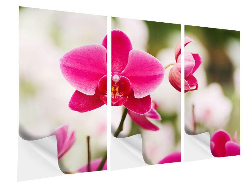 Klebeposter 3-teilig Perspektivische Orchideen