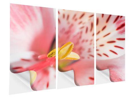 Klebeposter 3-teilig Der Lilienstempel