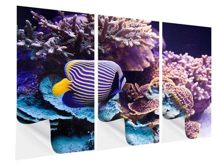 Klebeposter 3-teilig Faszination Unterwasser