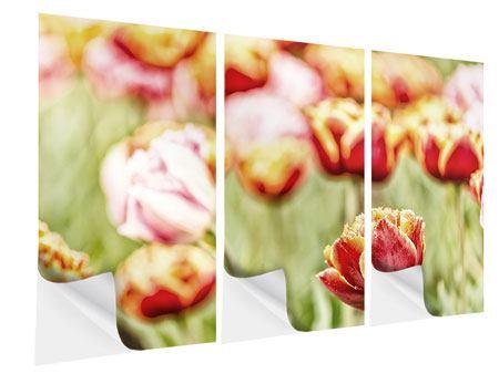 Klebeposter 3-teilig Die Schönheit der Tulpe