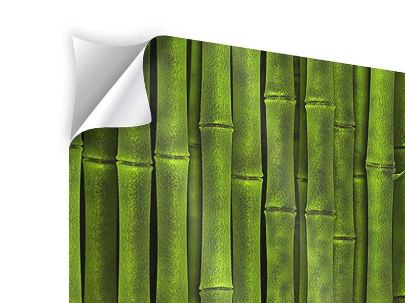 Klebeposter 3-teilig Wasserspiegelung Bambus