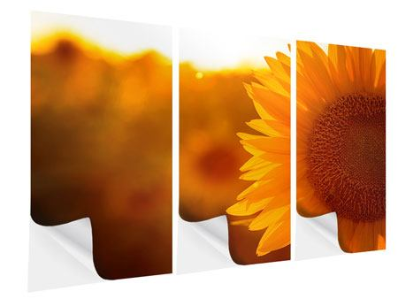 Klebeposter 3-teilig Macro-Sonnenblume