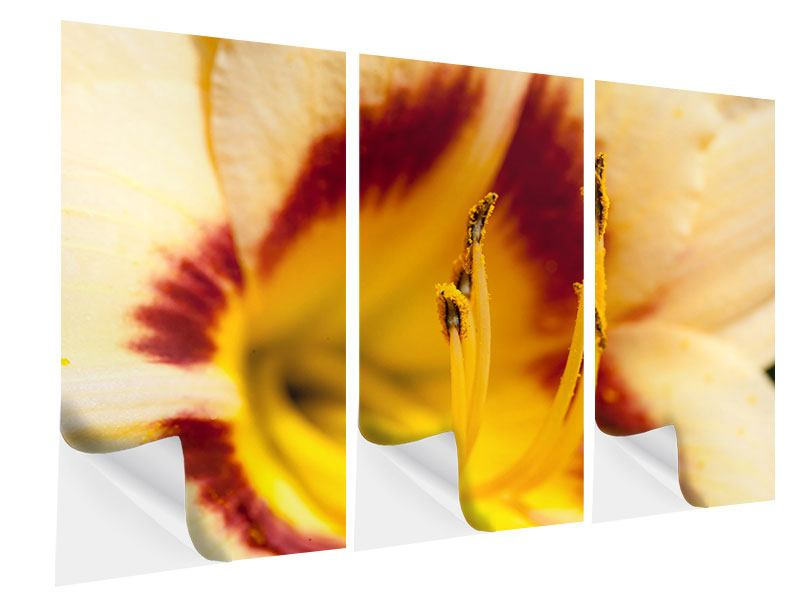 Klebeposter 3-teilig Riesenlilie