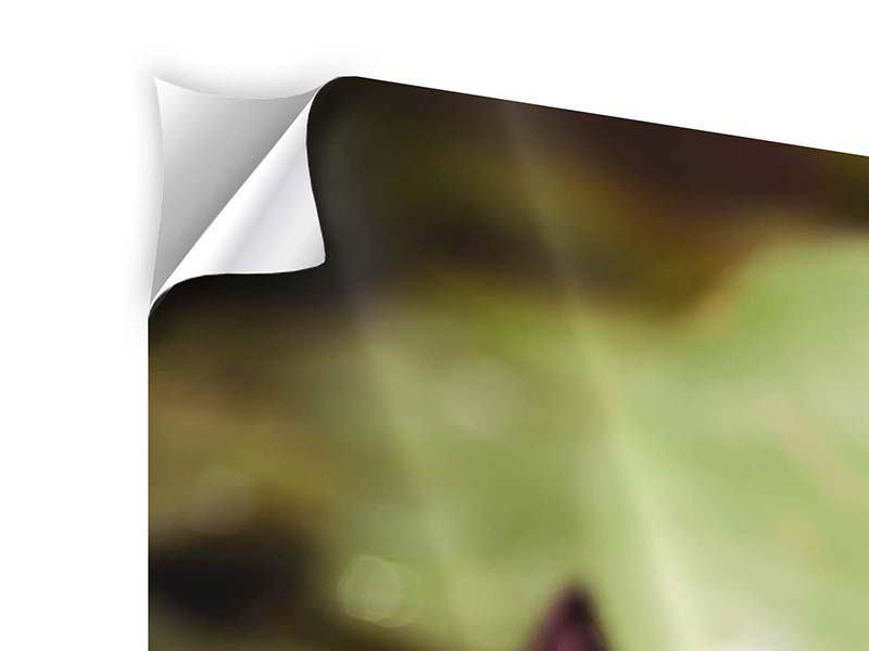Klebeposter 3-teilig Seerosen bei Sonnenaufgang