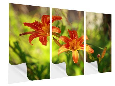 Klebeposter 3-teilig Lilien in der Natur
