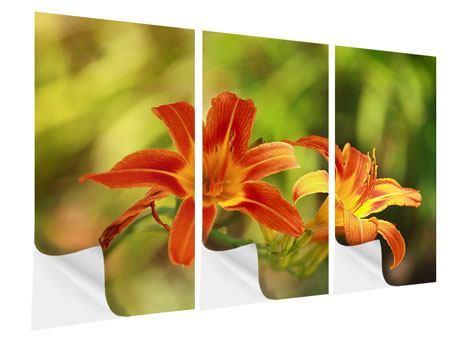 3 Piece Self-Adhesive Poster Natural Lilies