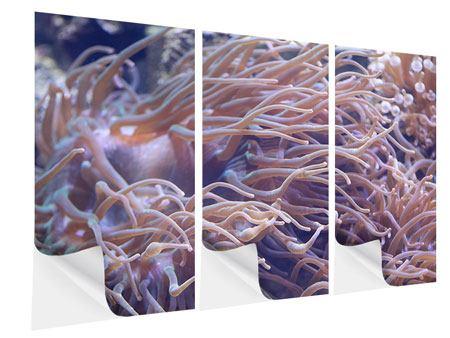 Klebeposter 3-teilig Korallenriff