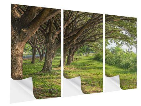 Klebeposter 3-teilig Alter Baumbestand