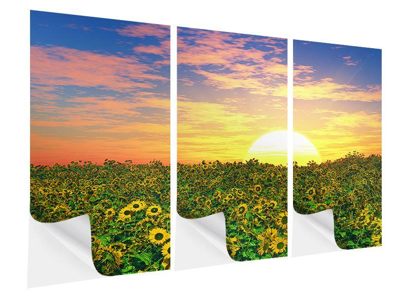 Klebeposter 3-teilig Blumenpanorama bei Sonnenuntergang