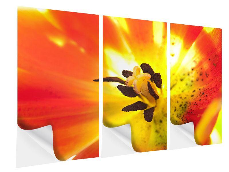 Klebeposter 3-teilig Die Narbe einer Tulpe XXL