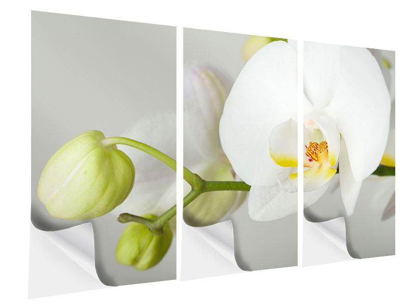 Klebeposter 3-teilig Riesenorchidee