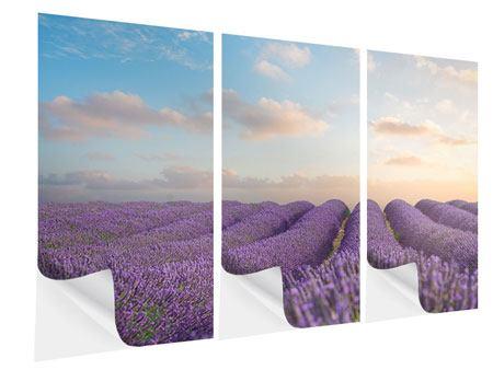Klebeposter 3-teilig Das blühende Lavendelfeld