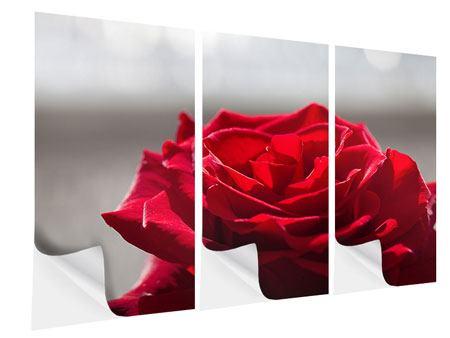 Klebeposter 3-teilig Rote Rosenblüte
