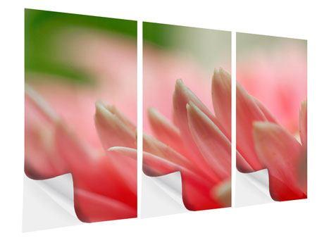 Klebeposter 3-teilig Close Up einer Blüte