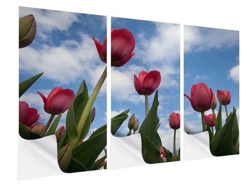 Klebeposter 3-teilig Tulpen im Himmel