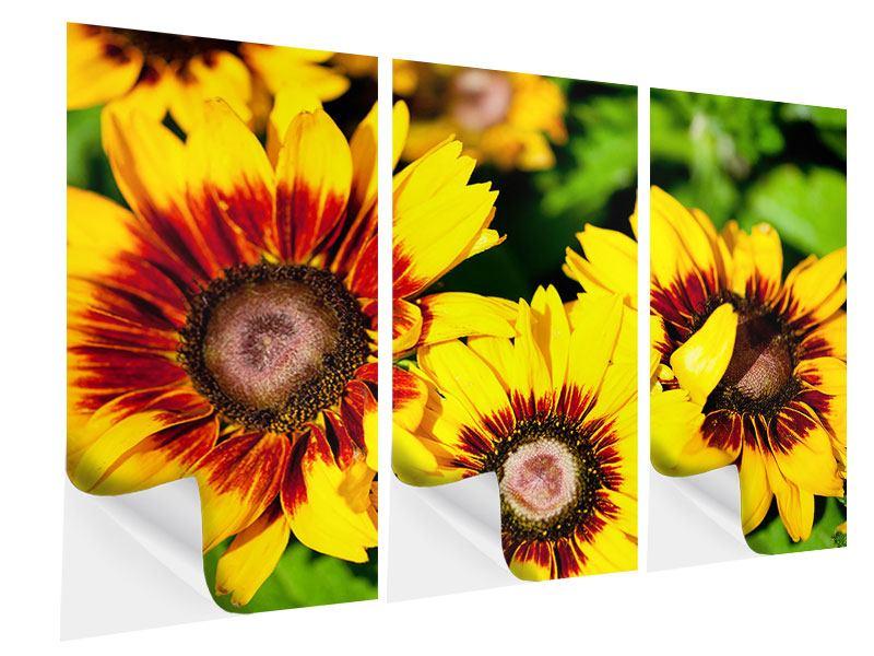 Klebeposter 3-teilig Reife Sonnenblumen