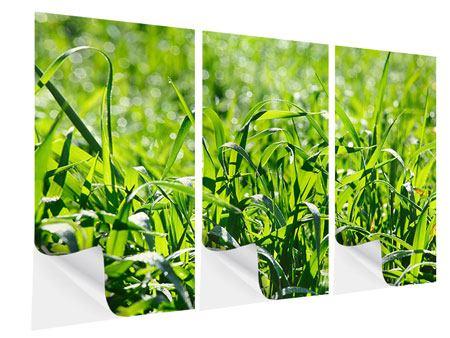 Klebeposter 3-teilig Sonniges Gras