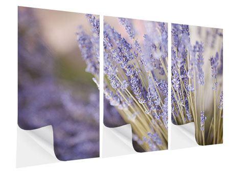 Klebeposter 3-teilig Lavendel XXL