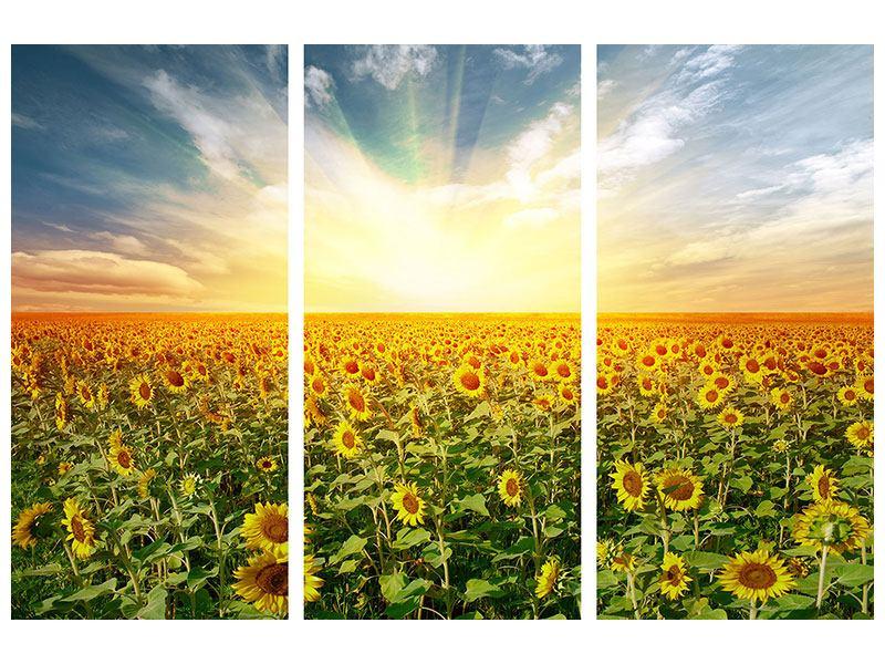 Klebeposter 3-teilig Ein Feld voller Sonnenblumen