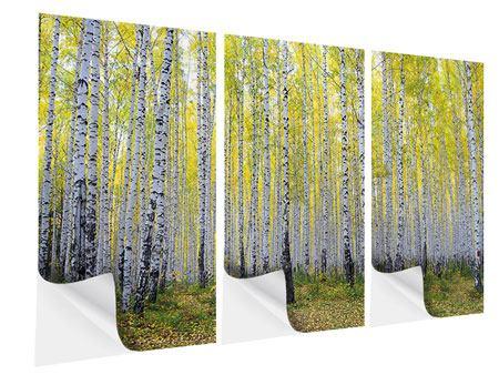 Klebeposter 3-teilig Herbstlicher Birkenwald