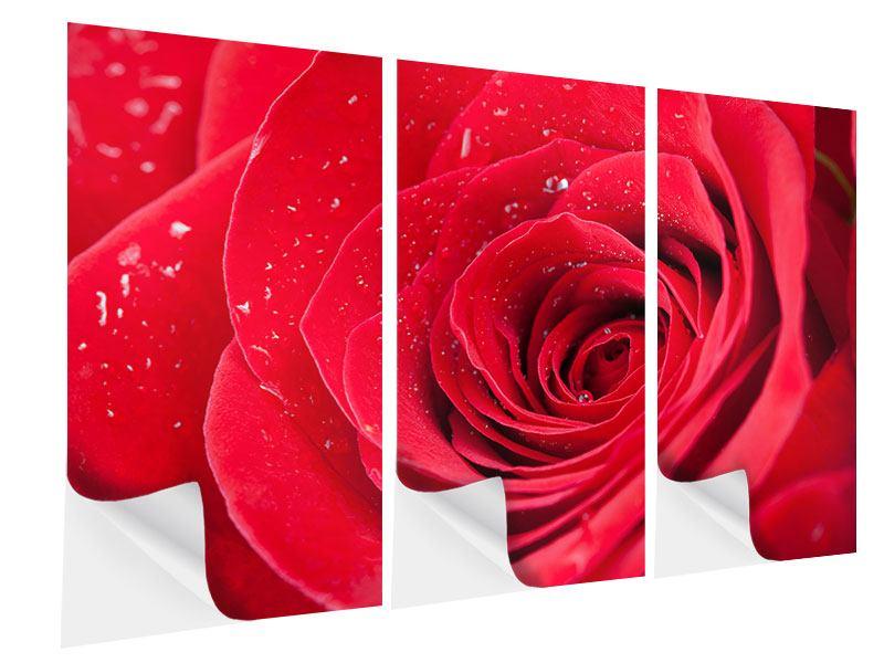 Klebeposter 3-teilig Rote Rose im Morgentau