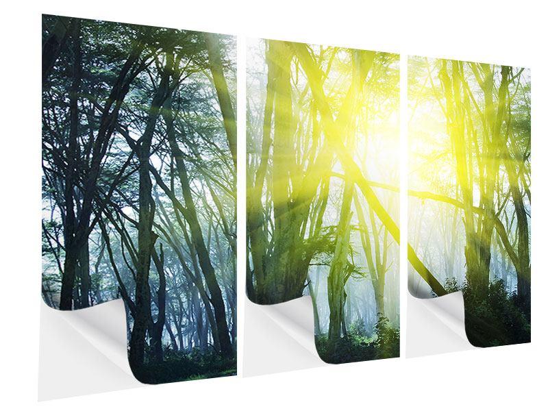Klebeposter 3-teilig Sonnenstrahlen im Wald