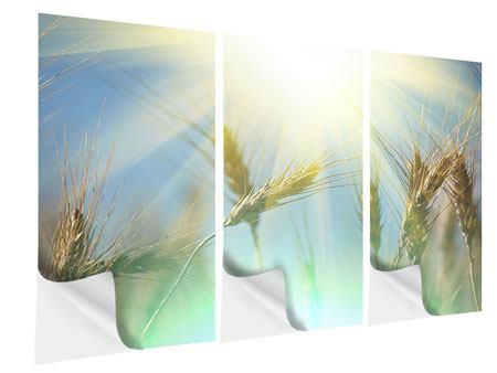 Klebeposter 3-teilig König des Getreides