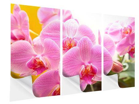 Klebeposter 3-teilig Königliche Orchideen