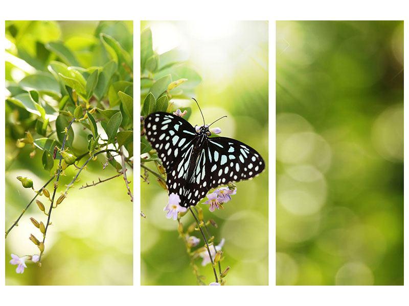 Klebeposter 3-teilig Papilio Schmetterling XXL