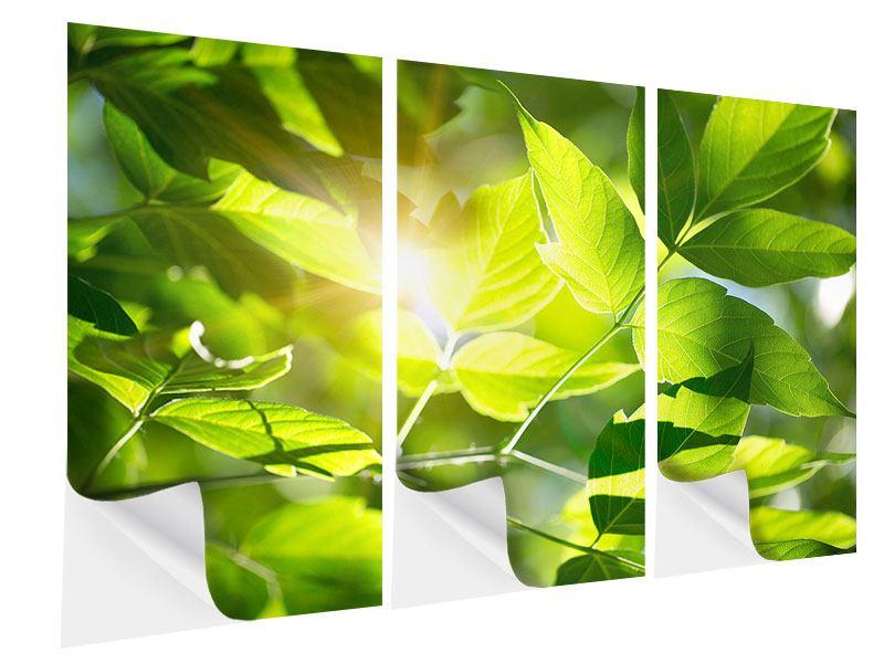 Klebeposter 3-teilig Es grünt so grün