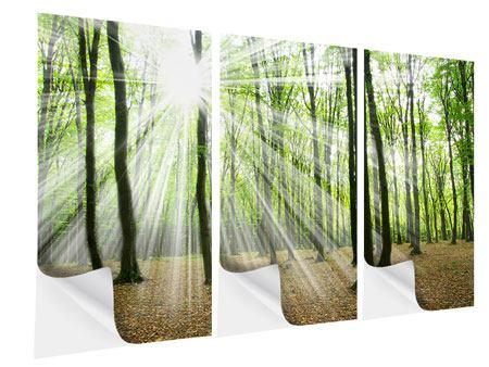 Klebeposter 3-teilig Magisches Licht in den Bäumen
