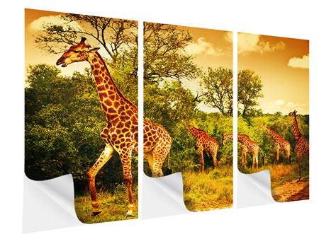 Klebeposter 3-teilig Südafrikanische Giraffen