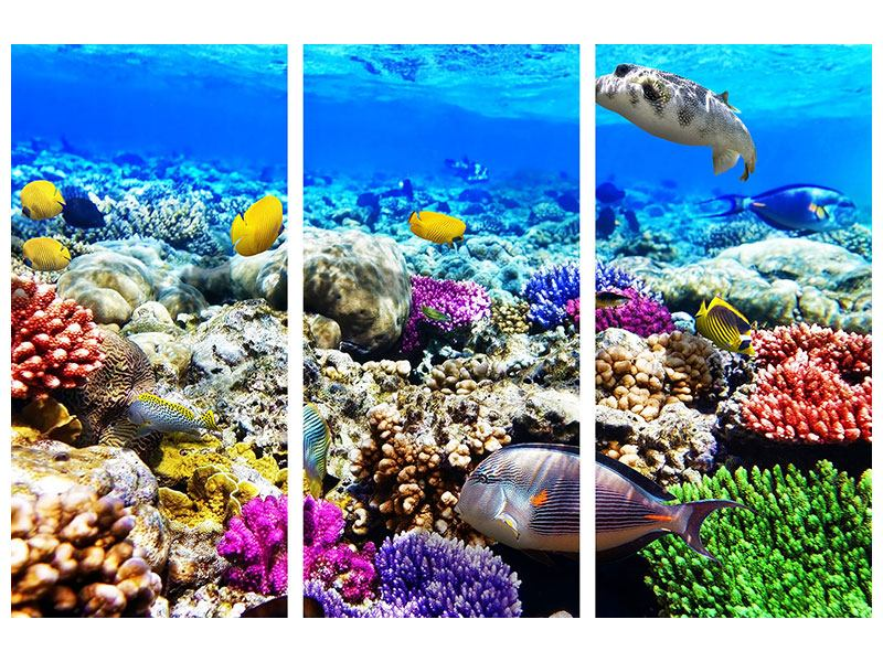 Klebeposter 3-teilig Fischaquarium