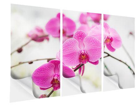Klebeposter 3-teilig Das Symbol der Orchidee