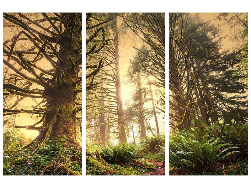 Klebeposter 3-teilig Sonnenuntergang im Dschungel
