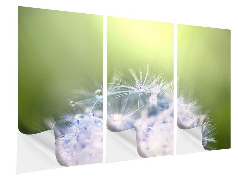 Klebeposter 3-teilig Pusteblume XL im Morgentau