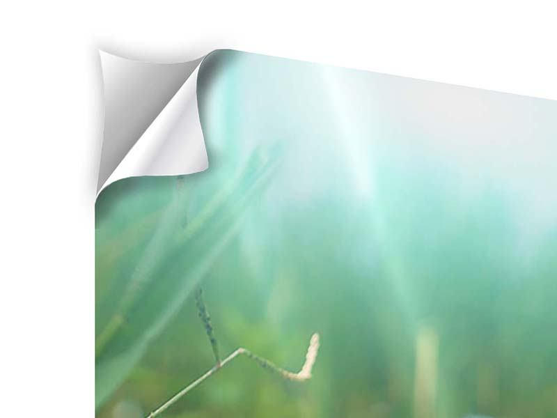 Klebeposter 3-teilig Im Seerosenteich