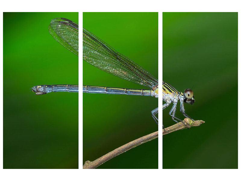 Klebeposter 3-teilig Die Libelle