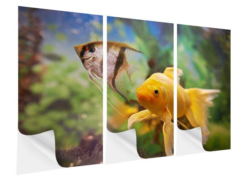 Klebeposter 3-teilig Bunte Fische