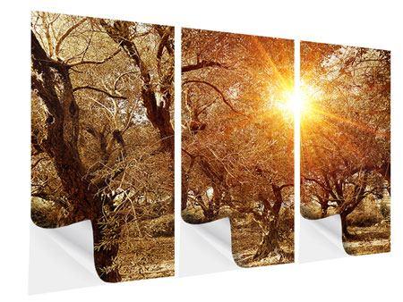Klebeposter 3-teilig Olivenbäume im Herbstlicht